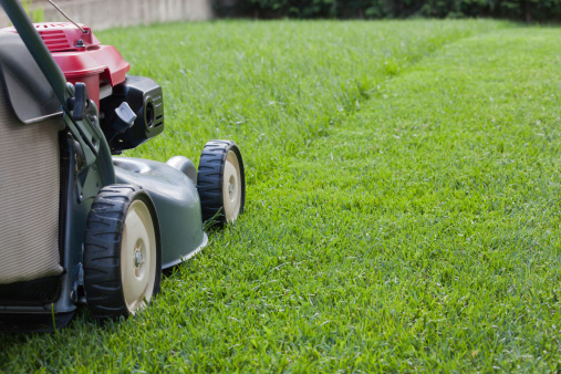 Grass - Prepping Your Home for Vacation